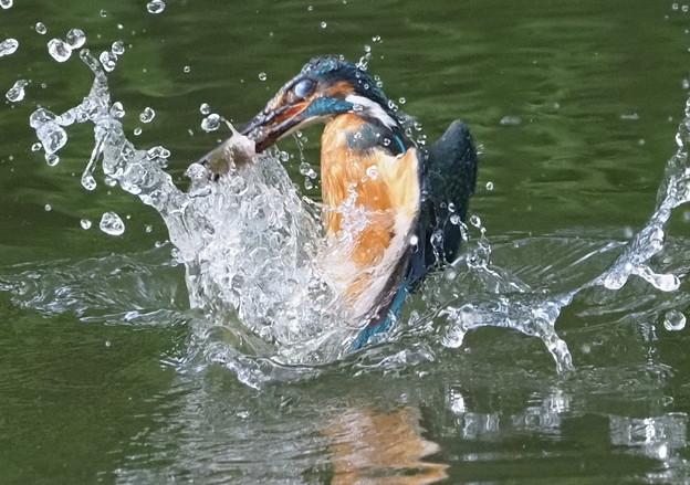 お魚ゲット