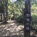 野鳥の森(神戸市立森林植物園)