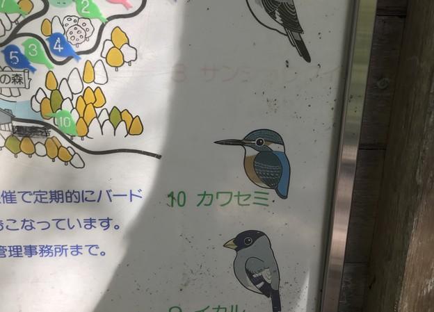 野鳥の森  六甲山系/神戸市立森林植物園