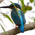 青い鳥、、、、