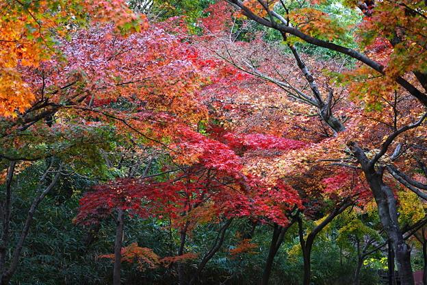紅葉    大阪/山田西公園