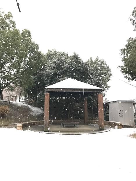 大阪市内も積雪(うっすら)1月12日(火)