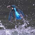 お魚ゲットな◇\(^o^)/◆