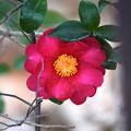 Photos: Flower