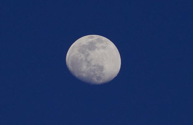 Photos: お月さん   2月24日(水)夕刻