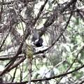 写真: 巣からの飛び出し♪