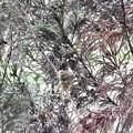 写真: お風呂のように…巣の中♪