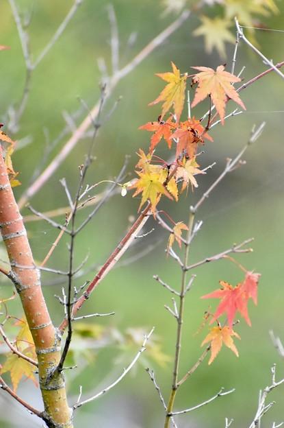 小さい秋見~つけた~♪