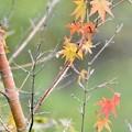 Photos: 小さい秋見~つけた~♪