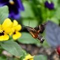 写真: 花の中を舞う…   Part-2
