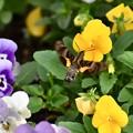 写真: 花の中を舞う…