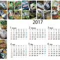 Photos: ワサビ菓子(他)カレンダー2017 前半