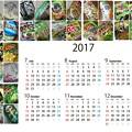 Photos: ワサビ菓子(他)カレンダー2017後半