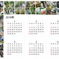 Photos: ワサビ菓子(他)カレンダー2018 前半