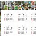 Photos: ワサビ菓子(他)カレンダー2018 後半