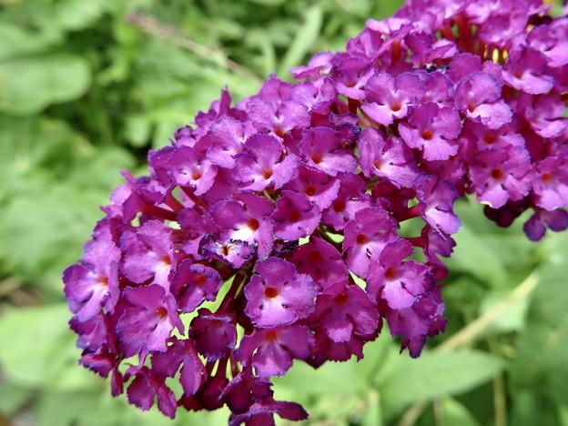 Photos: 蝶を呼ぶ花…