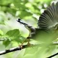 Photos: 飛び出し…緑が邪魔なんですけど…T^T