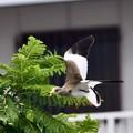 Photos: 飛翔…