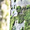 Photos: 大樹に抱かれて…