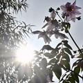 Photos: 太陽が燦々と…