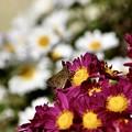 Photos: 花の中…