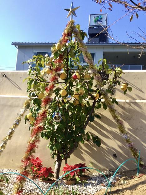 Photos: 美味しそうな?(酸っぱそうな?)クリスマスツリー発見♪(笑笑)
