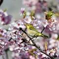 桜の中で…