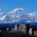 Photos: 天気がいいので撮りたくなった。