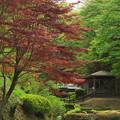 春紅葉 2