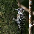 Photos: 野鳥が戻ってきたかな・・・