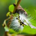 Photos: 害虫と呼ばれても・・・