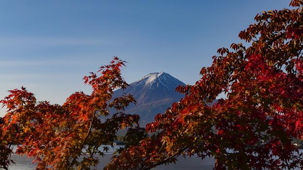紅葉を見つめる富士
