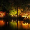 Photos: ライトアップに魅せられて・・・ (2)