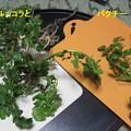写真: 野菜高騰の中 鮮度抜群 自家製 葉物