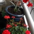赤い花ばかり