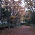 ケヤキの落ち葉の絨毯