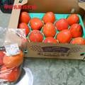 枯露柿用の百目柿