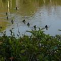 噴水池の渡り鳥葉今はこれだけ