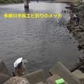 多摩川で沢山釣れていると聞いて行ったが