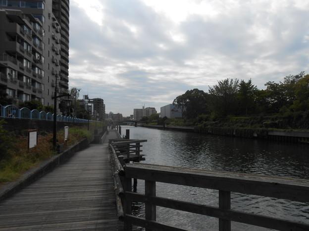 横十間川のハゼを探して