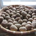 今年も五泉から里芋を取り寄せました