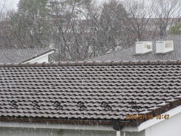 積もらない雪