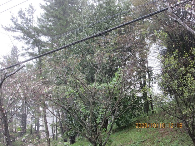 永山桜並木