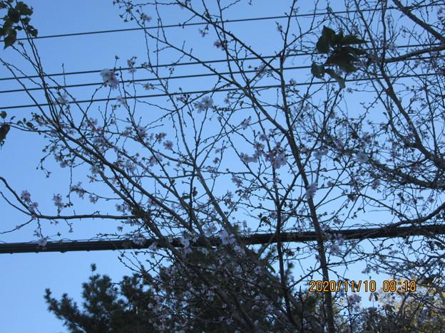 空も花も寒さが増している