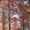 落ち葉でにぎわう直前の紅葉