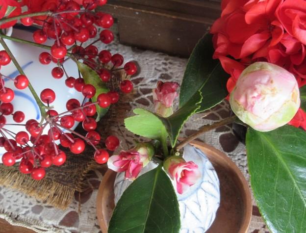 大輪種椿ピンクと斑入りミニサイズ