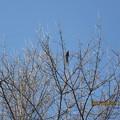 Photos: 木の枝をつついて渡り歩いていた