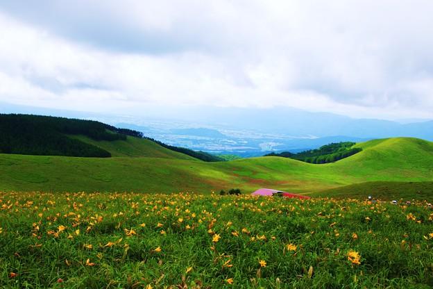 黄色い絨毯の霧ケ峰