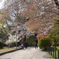 今年の春に~♪♪