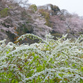 今年の名古屋城~(^^♪
